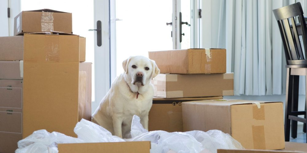 Help Keep Pets Calm During A House Move